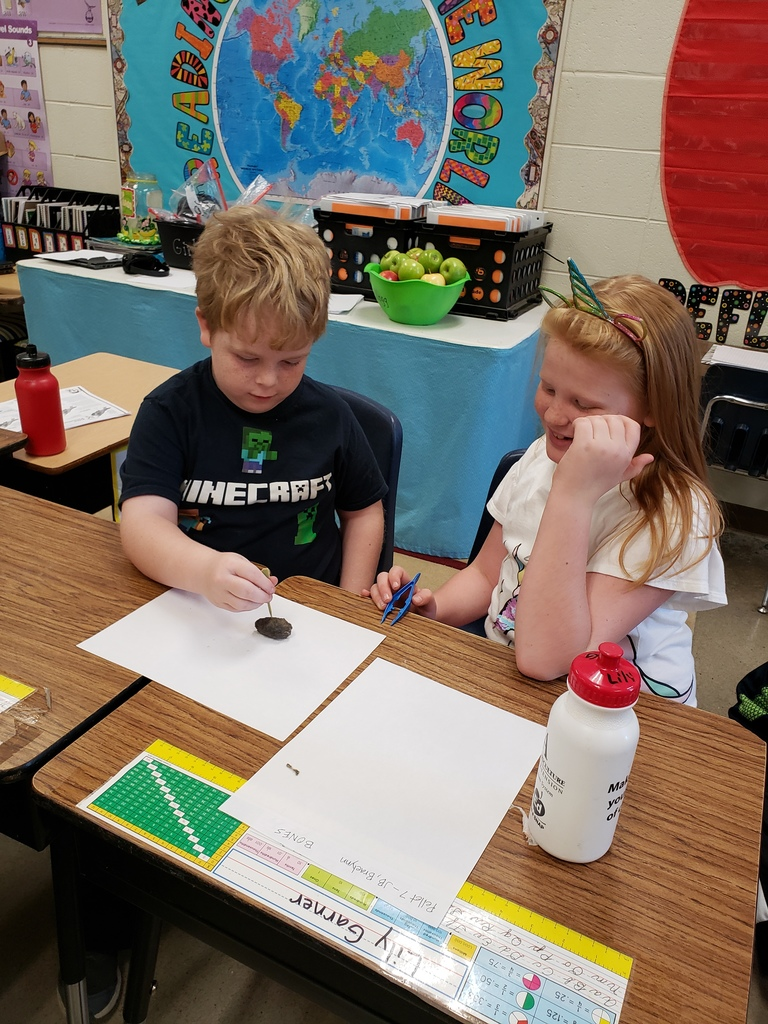 Mrs. Kellogg's 3rd Grade class has been learning about and exploring food chains. We dissected owl pellets and identified bones from many different animals. We found evidence to confirm the food chain. Animals eat plants for food, then animals eat other animals for food. All living things are connected!